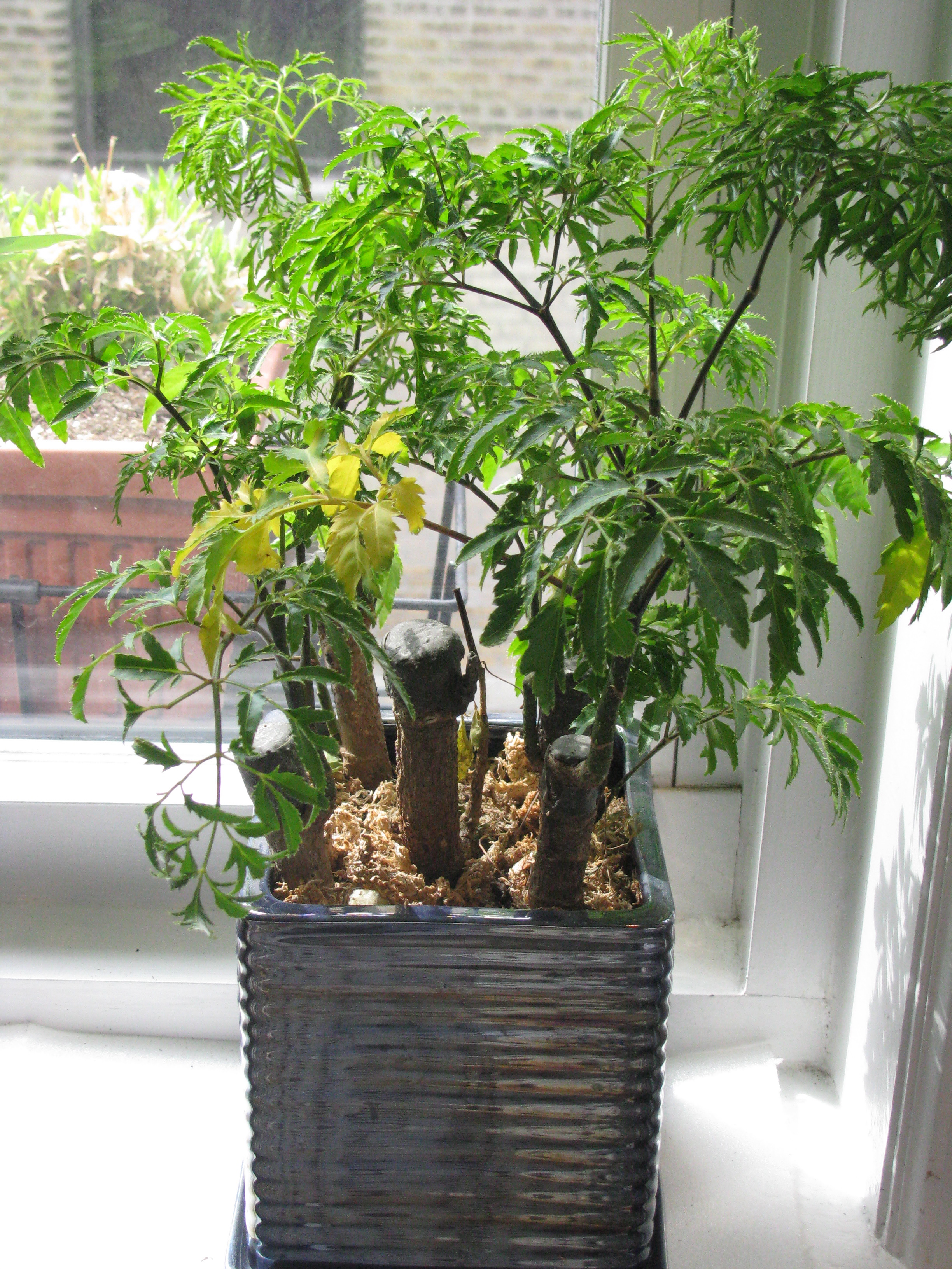 House Plants: Orson Stroble: Identifying House Plant