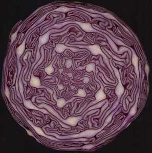 red_cabbage_small